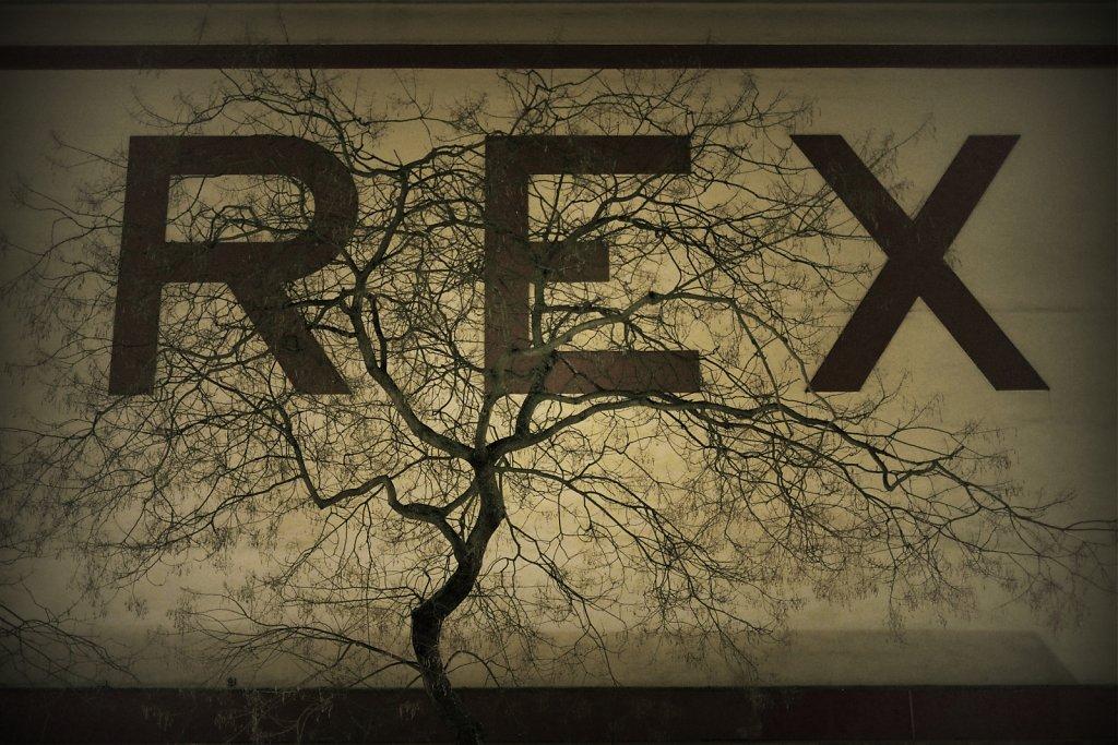 rex-arbre-def.jpg