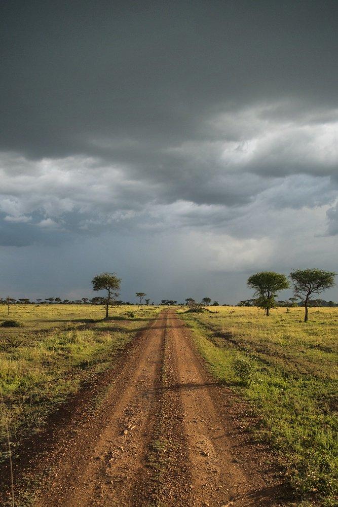 serengeti-Snapseed.jpg